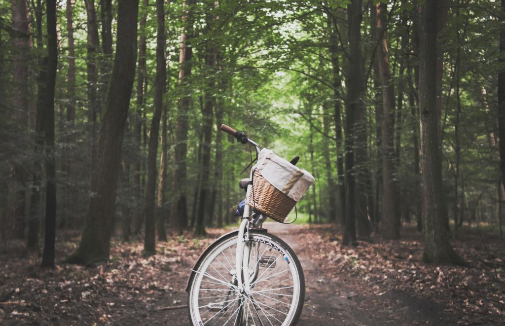 Your Marketing Foundation Journey - a bike ride through the forest